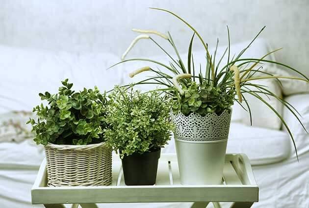 Artilux   Best Plants To Grow In Your Bedroom (2)